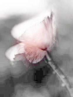 Pink, Gray & White