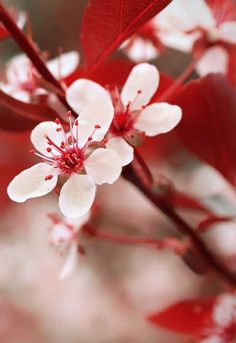Stunning red and white - Japan