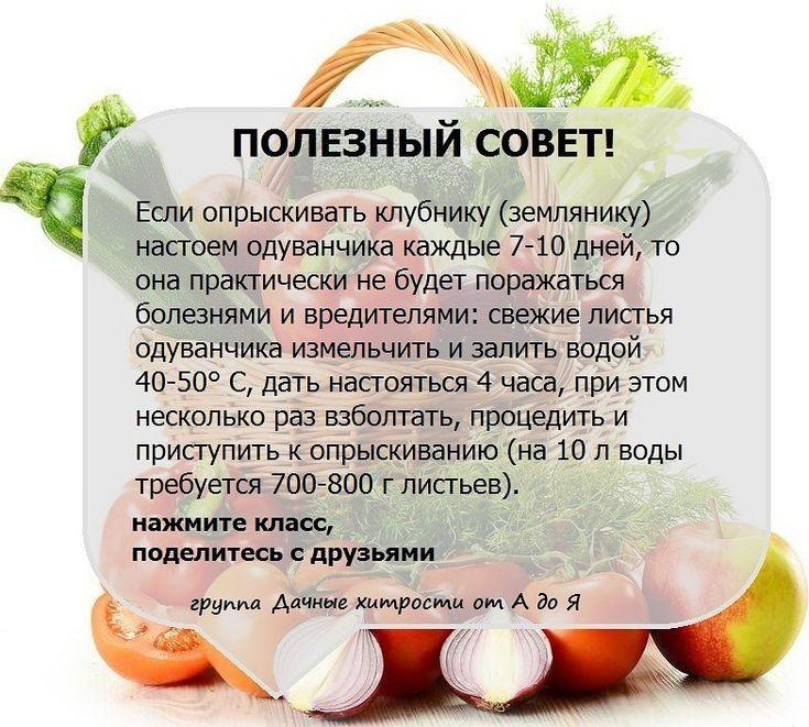 Полезные советы для сада и огорода