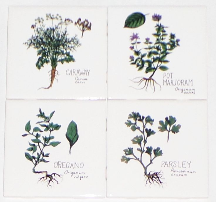 http://www.houzz.com/photos/60040862/Green-Herb-Ceramic-Tile-4-of-425-x-425-Parsley-Oregano-Marjoram-Caraway-farmhouse-tile-murals