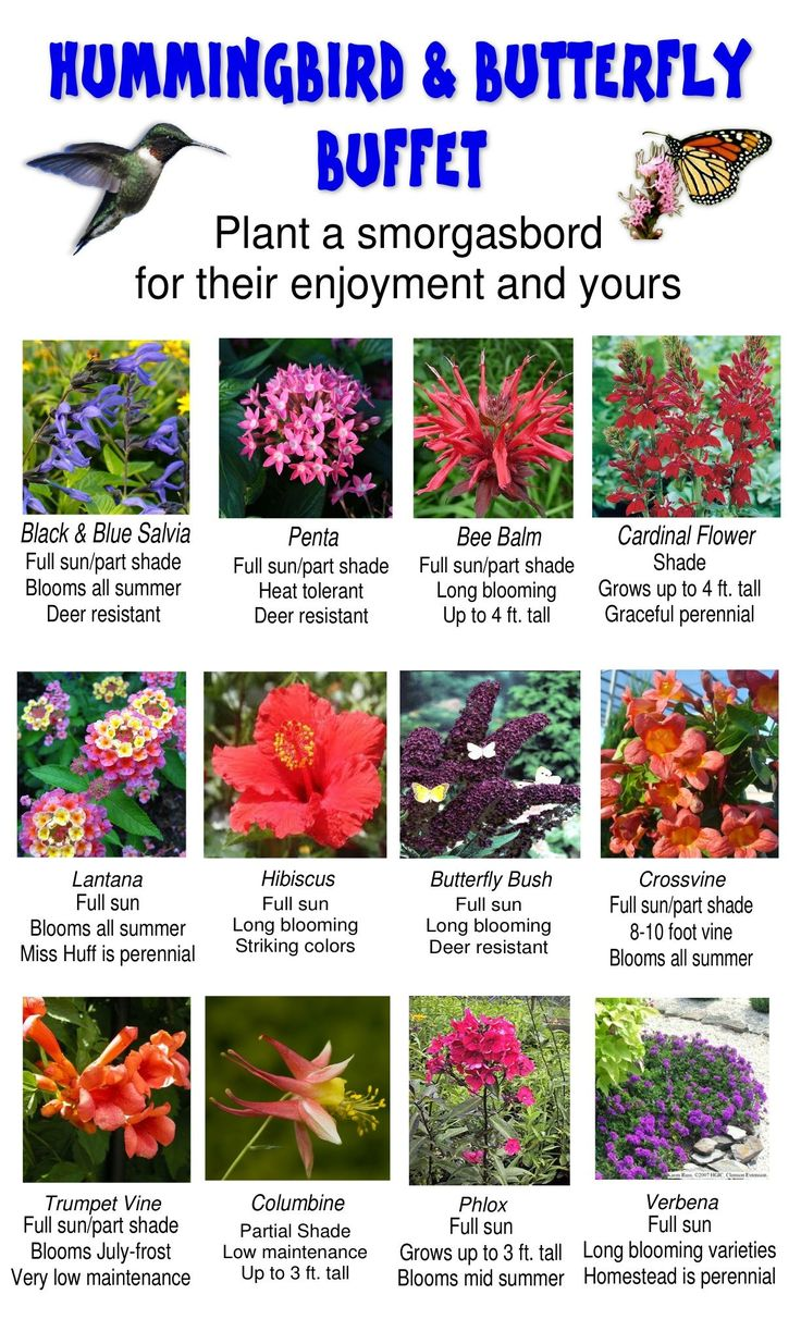 List of annual flowers ided by color sun amp shade types - Attracting Hummingbirds And Butterflies To Your Garden Can Be Easier Than You Think We Suggest