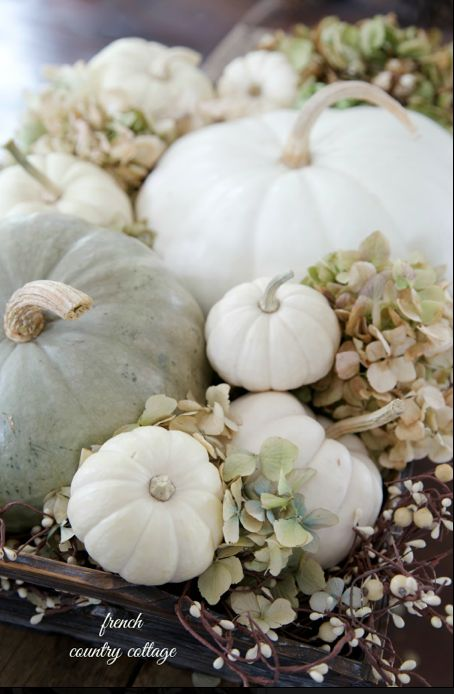 White pumpkin round up - Fall decor
