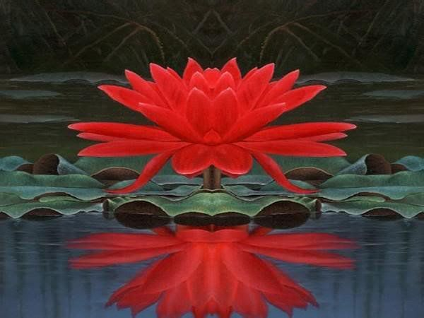 Pictures Of Red Lotus Www Pixshark Com Images