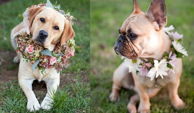 Pets no Casamento no Campo