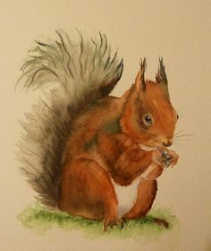 Sharon Whitley - Red Squirrel