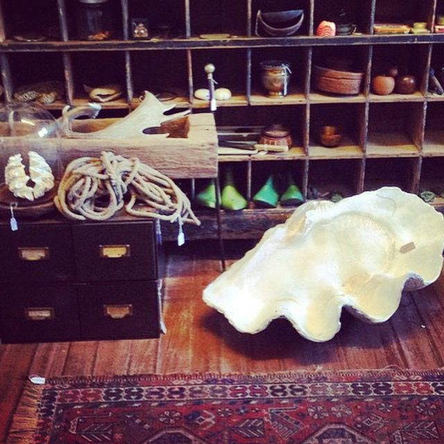 GIANT Antique Clam shell