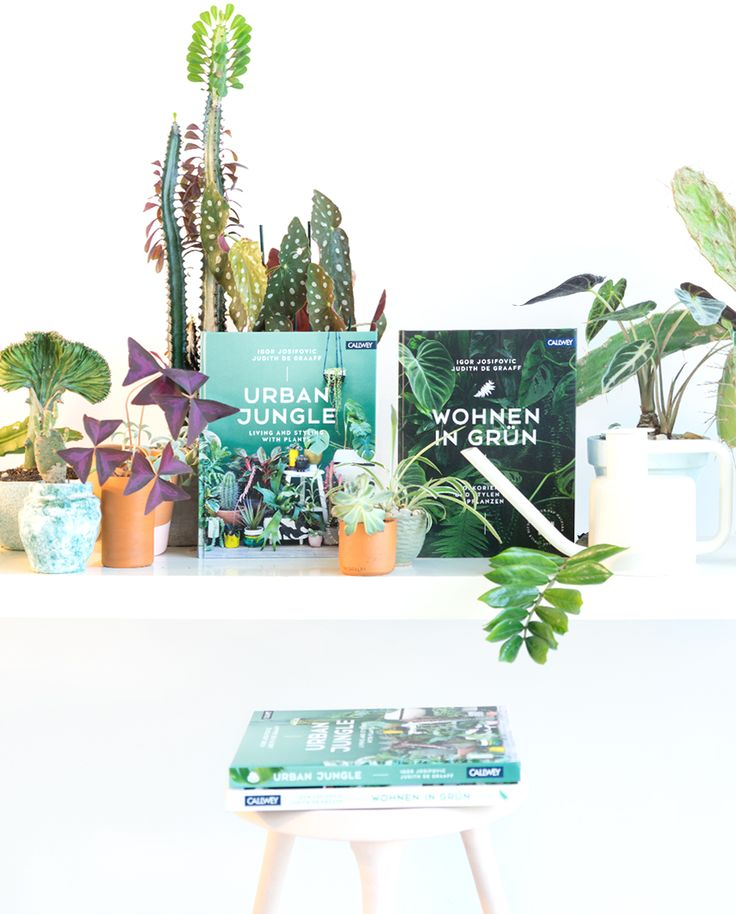 Urban Jungle Rug: Urban Jungle: Living And Styling With Plants