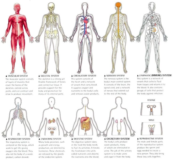 The Human Body Systems On Tildee How To And Step By Step