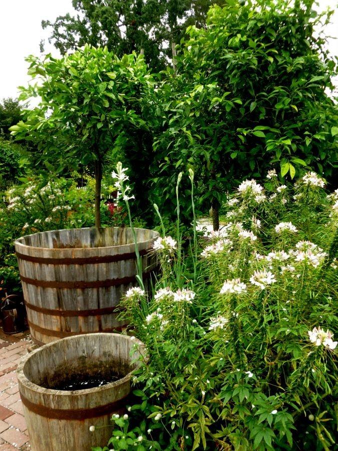 The Colonial Nursery Garden Details Pinterest Williamsburg And Gardens