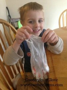 Plant seeds in the fingers of a glove using cotton balls