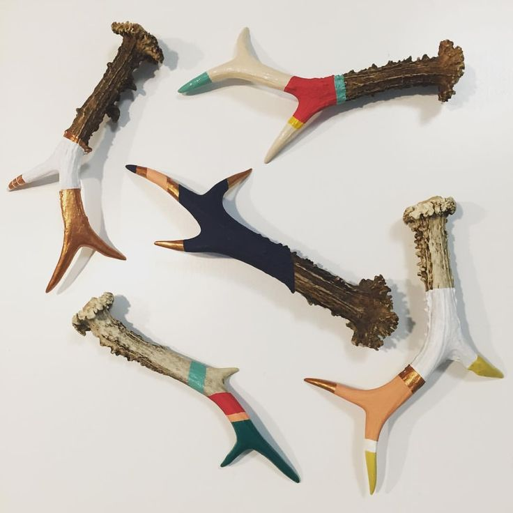 Naturally shed colorful painted antlers by tuliManna