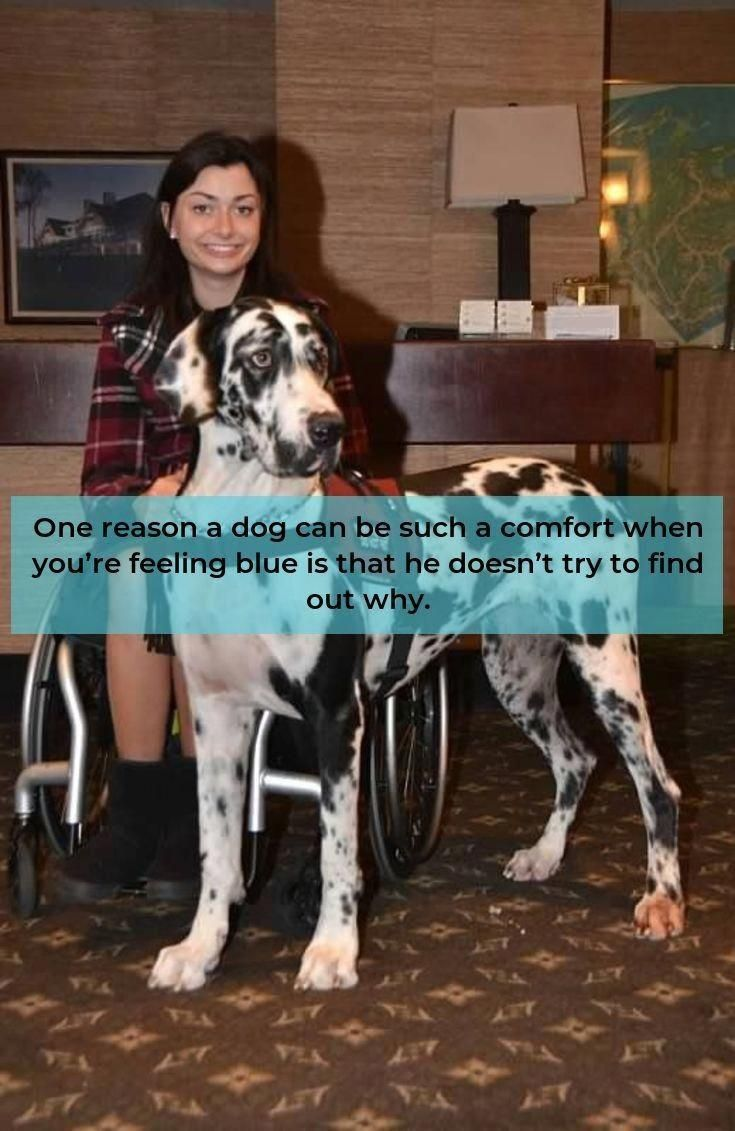 Visit Our Site For Additional Details On Great Dane It Is