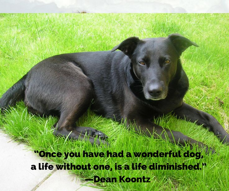 Quotes for Dogs | ZeVi Dog