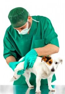 Deramaxx for Dogs - Painkillers for Dogs