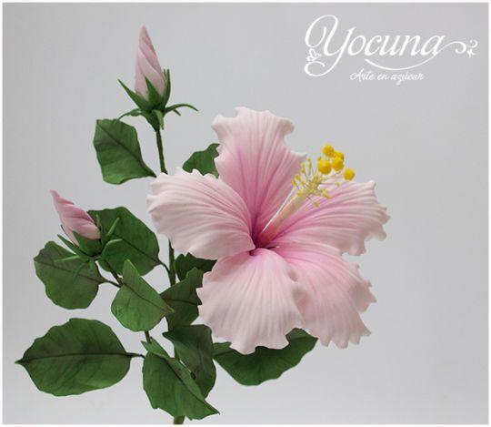 {Lovely pale-pink Hibiscus by Yolanda Cueto - Yocuna Floral Artist} Rosa Sinensis en pasta de goma - Hibiscus Rosa Sinensis Gumpaste.