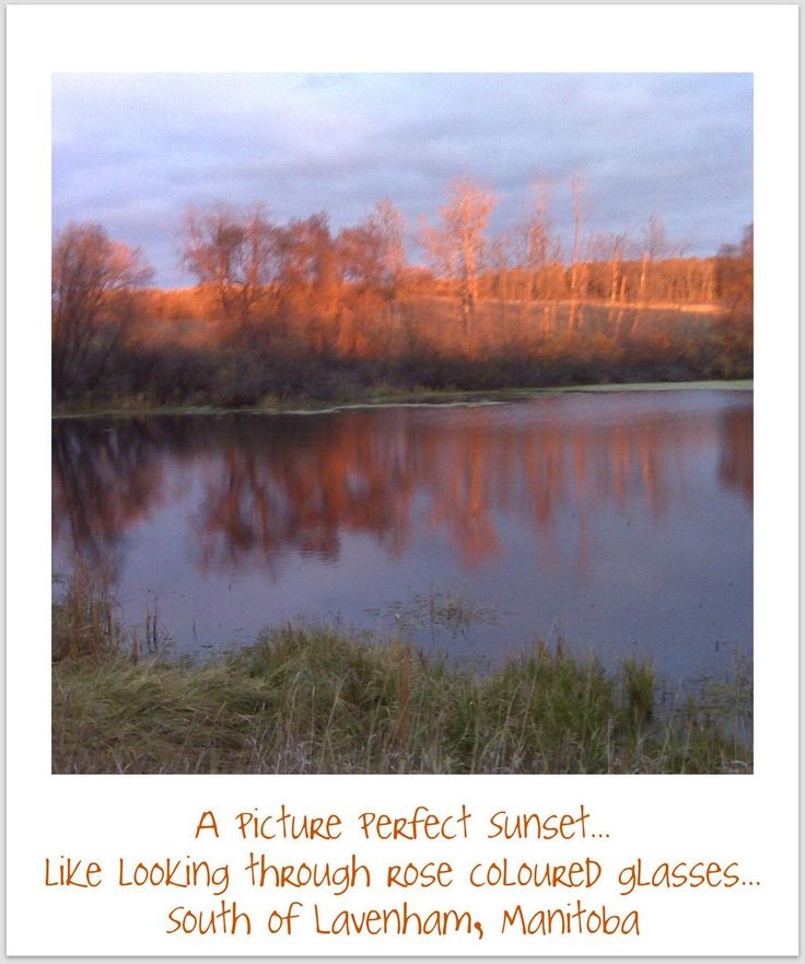 A picture perfect sunset , like looking through rose colored glasses :)  Reflections in a Pond, Lavenham, Manitoba