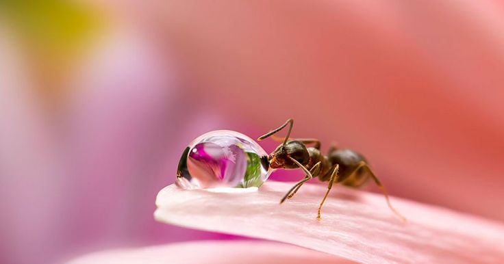 """La popular fotógrafa japonesa Miki Asai, especializada en la fotografía macro, nos enseña un extraordinario mundo oculto en miniatura. Su viaje a través de la fotografía comenzó cuando ella consiguió su primer objetivo macro y comenzó a tomar fotos en su propio jardín. Ella comentó: """"Estaba buscando a través del lente, y noté que había hermosas gotas de lluvia y una pequeña hormiga caminando a través de ellas. Ni siquiera la habría visto de no ser por la lente macro. Así que me dije, ¿cómo…"""