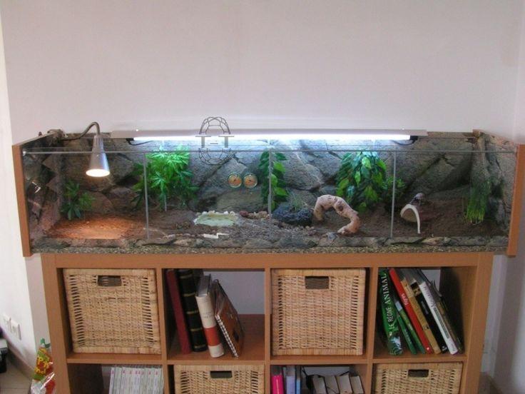 les 25 meilleures id es de la cat gorie terrarium serpent sur pinterest terrariums serpents. Black Bedroom Furniture Sets. Home Design Ideas