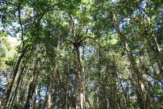 Will Asia Pulp and Paper's policy protect Indonesian forests? Canopy News