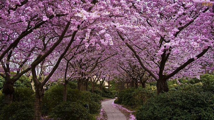 Cúal es el tiempo previsto para esta primavera - http://www.meteorologiaenred.com/tiempo-previsto-esta-primavera.html