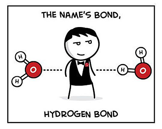 Bond, Hydrogen Bond…  WHERE WAS THIS WHILE I WAS IN CHEMISTRY???