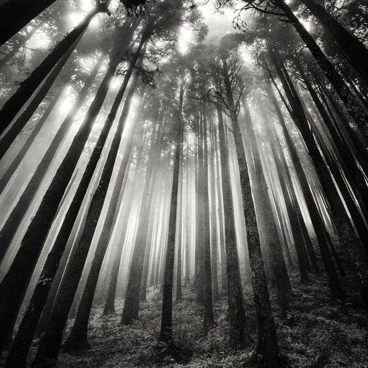 Leśny klimat (37)