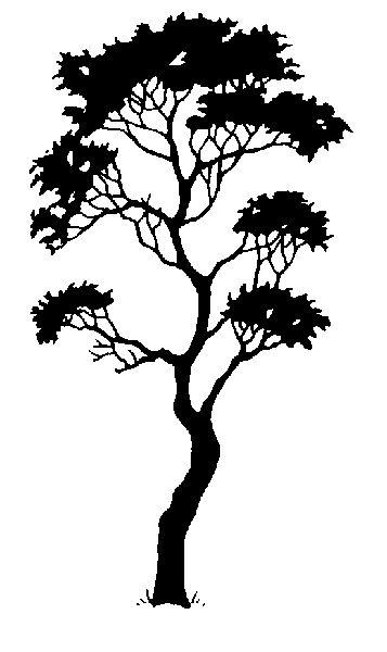 Silhouette - arbutus