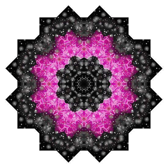 Pink and black rose mandala by Tracey Lee Everington