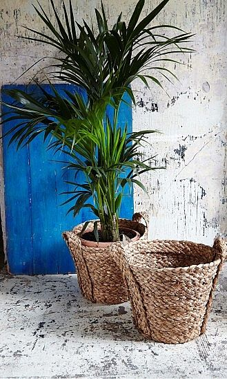 We need these giant basket planters at The Jungalow!!