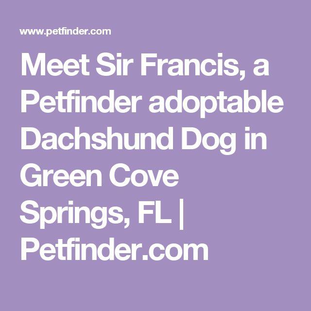 Meet Sir Francis, a Petfinder adoptable Dachshund Dog in Green Cove Springs, FL | Petfinder.com