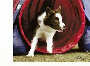 Ideas for Dog Agility Training At Home