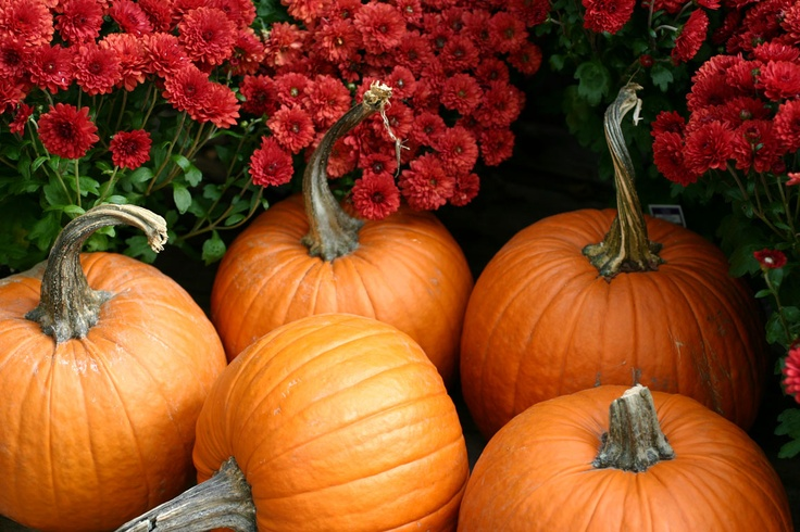 Pumpkins And Mums At Gardener 39 S Supply Fall In Love Pinterest Gardens And Pumpkins