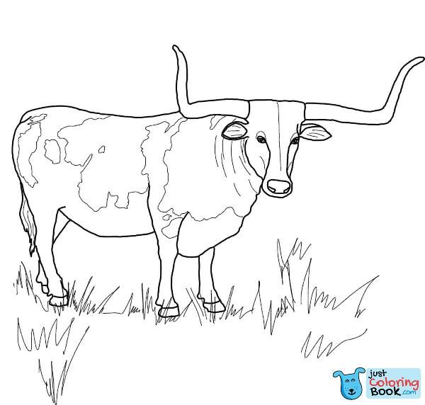 Pin On Bull Coloring Pages
