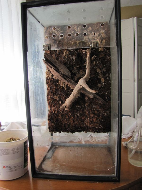 My DIY Crested Gecko Vivarium