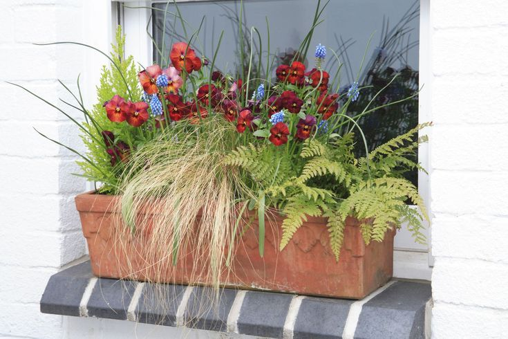 Brighten Your Shady Landscape With Window Boxes