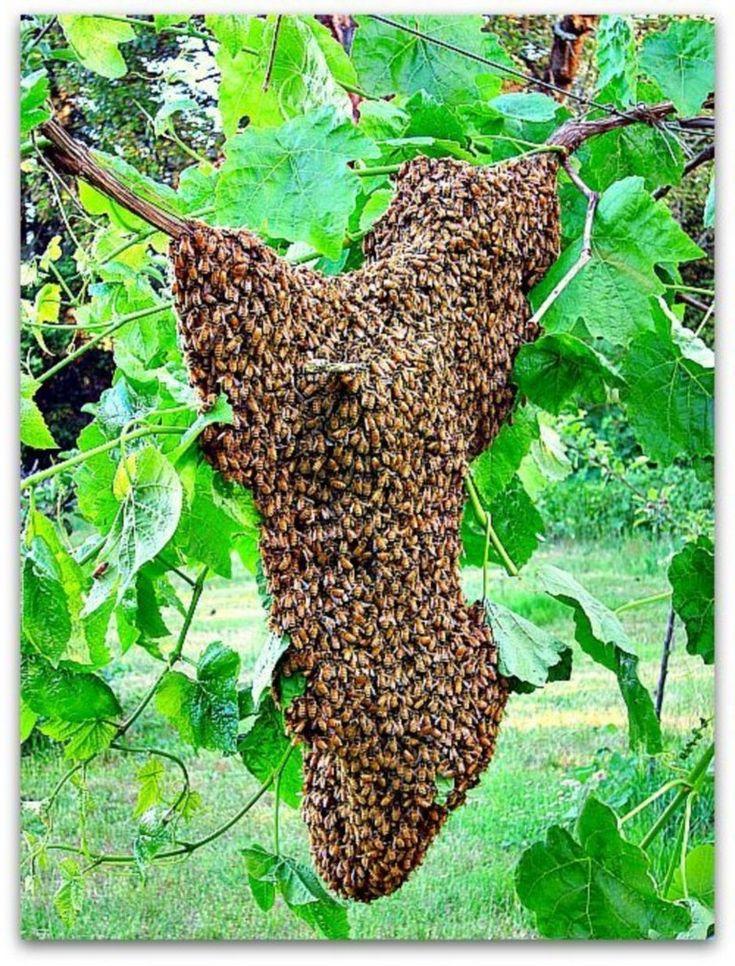 35+ Beautiful Bee Friendly Garden Designs Productive ...
