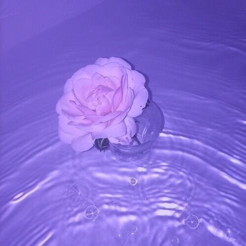 Image result for lavender   aesthetic