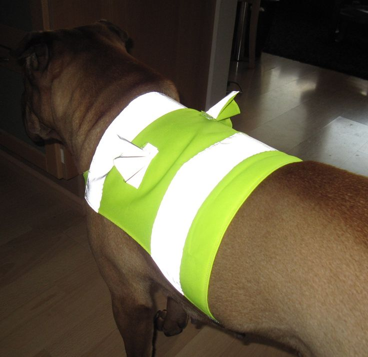 Reflective vest for dogs, little angel wings