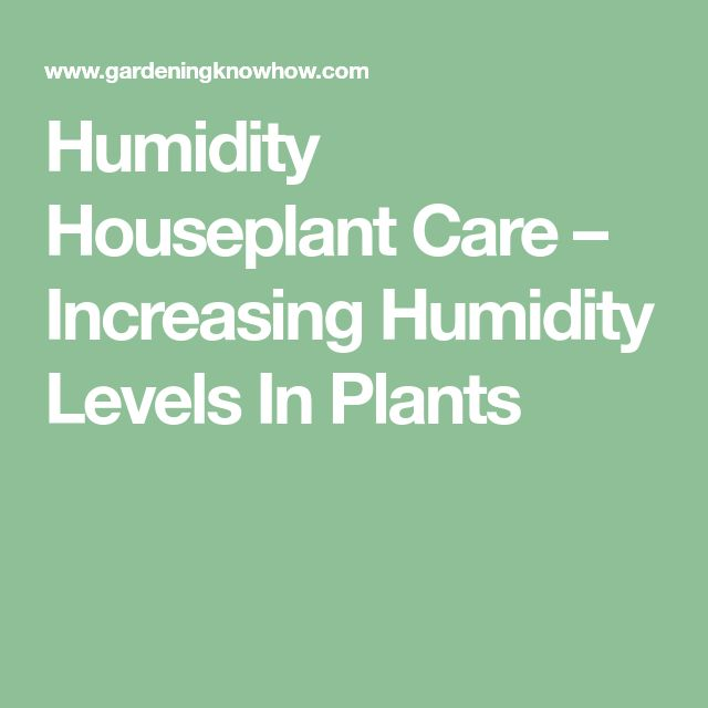 Humidity Houseplant Care – Increasing Humidity Levels In Plants