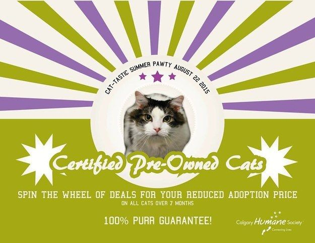"For one day only, the Humane Society offered reduced adoption prices for all ""pre-owned cats"" on the lot. 