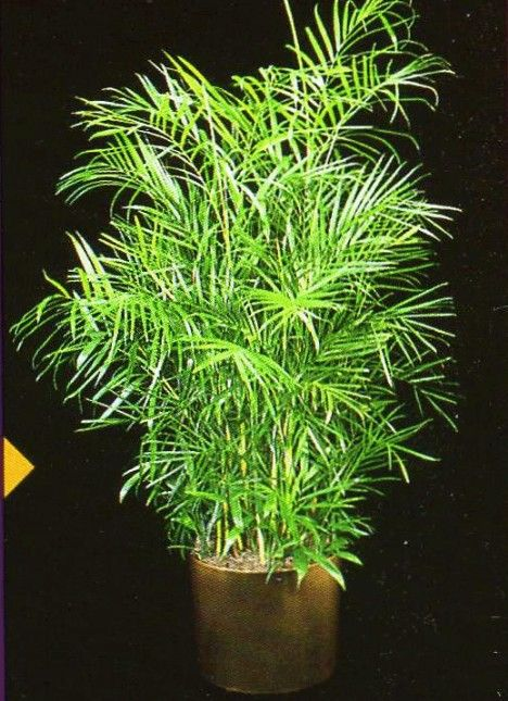 10 air purifying plants for homes offices trees home for Buy air purifying plants