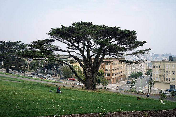 2017-09 Alamo Square Park San Francisco . . . . . #toptravelspot #sanfrancisco #california #usa #alamosquarepark #tree #locationindependent #travel #traveling #instantraveling #instatraveling #travelphotography #sonyalpha