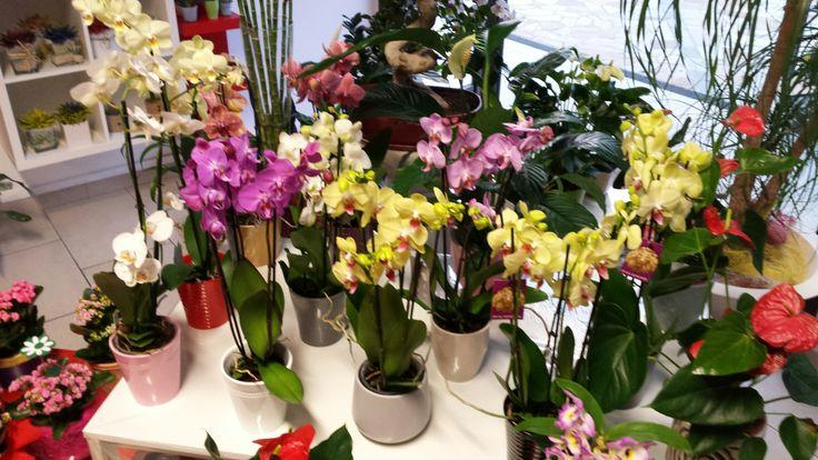 Buona sera piccolo assortimento di orchidea per iniziare la settimana