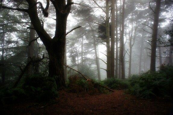 Leith Hill Misty Sunrise 2