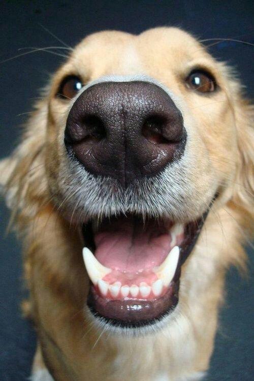 Прикольные картинки улыбки собак, картинки для открытки