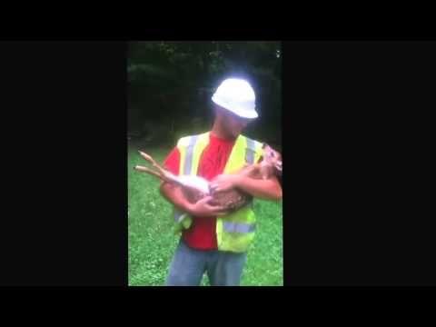A un ciervo bebe consentido le rascan su pancita - YouTube