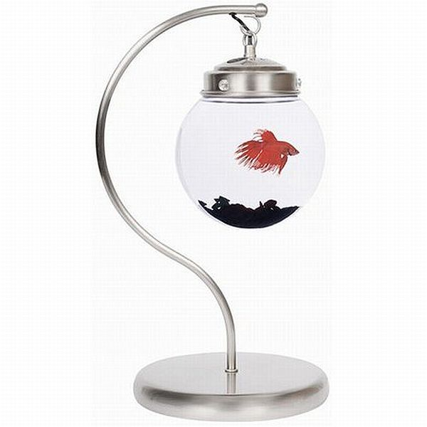 Hanging fish bowl nice also nice office gift betta for Betta fish bowl ideas