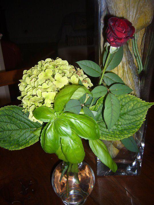 basilico.. ortensia rosa