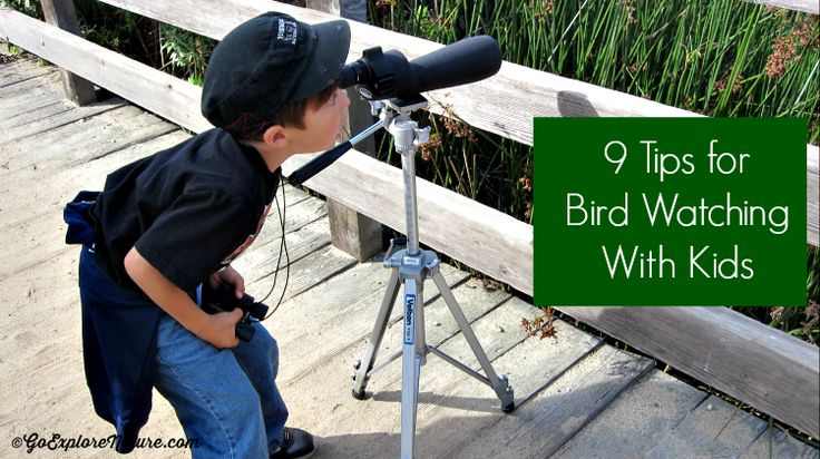 Bird watching is a great activity for kids as it can be done almost anywhere at almost anytime. Here are 9 tips to make it easier.