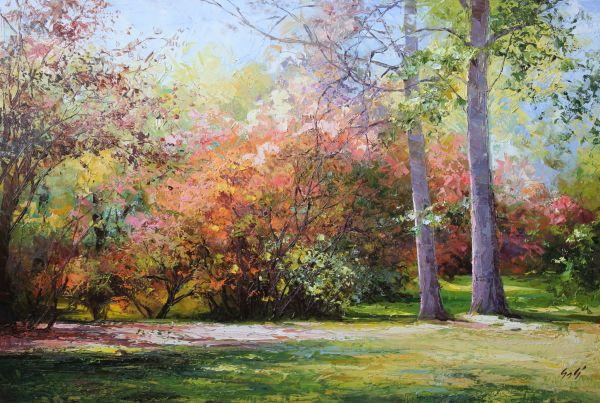 ősz, színes lombok, napfény
